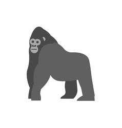 Flat gorilla on white background vector
