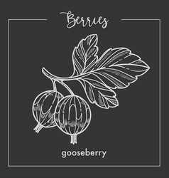 gooseberry on branch with leaves monochrome berry vector image