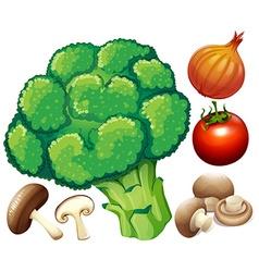 Many fresh vegetables on white vector