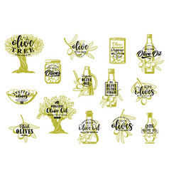 Olive oil bottles green tree branches and fruits vector