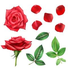 Rose Flower And Petals Set vector