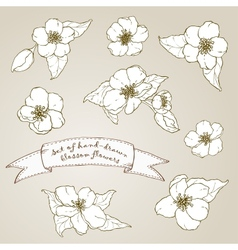 Set of hand drawn apple flowers vector image vector image
