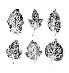 Set of Leaf imprints vector image vector image