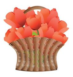 Basket of tulips vector image