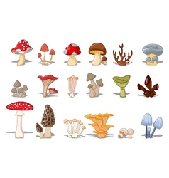 Different kinds of mushrooms vector