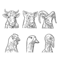 Farm animals icon set Heads pig cow chicken vector
