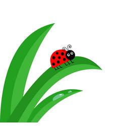 Ladybird ladybug insect fresh green grass stalk vector