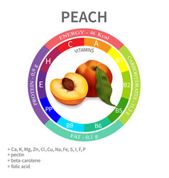 properties and nutrients in peach vector image