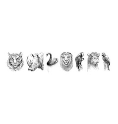 set of safari head animals black and white sketch vector image