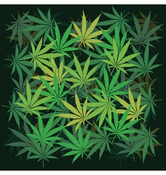Cannabis leaves vector