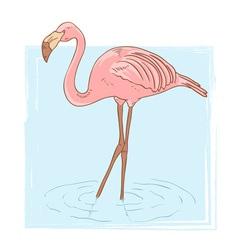 Flamingo card vector image