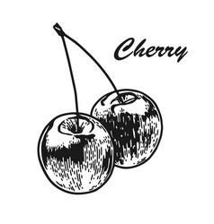 Cherry engraved sketch vector
