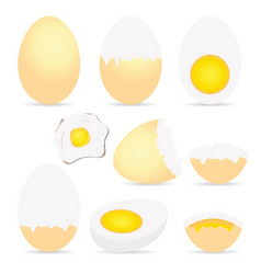 egg set colored vector image