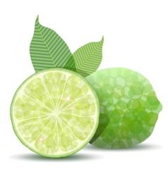 fresh lime vector image