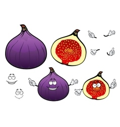 Honey sweet fig fruit cartoon characters vector
