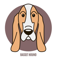 Portrait of basset hound vector