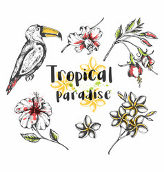Toucan bird and tropical flowers vector