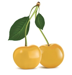 Cherry yellow vector image vector image