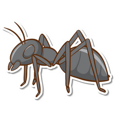 A sticker template with black ant isolated vector