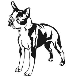 Decorative standing portrait of boston terrier vector