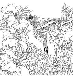 entangle stylized cartoon hummingbird vector image
