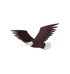 flying bald eagle with large wings isolated on vector image