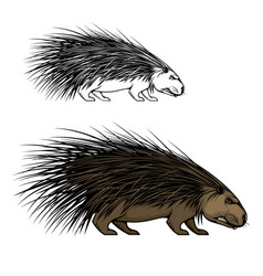 Porcupine animal mascot wild forest hedgehog icon vector