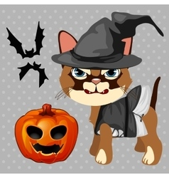 Angry cat with pumpkin and bats vector image