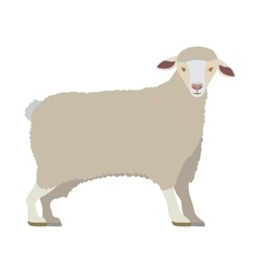 cartoon funny of sheep posing vector image