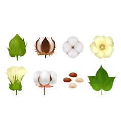 cotton realistic icon set vector image
