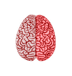 Human brain organ realistic model flat design vector