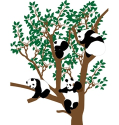 Panda on the tree vector image vector image