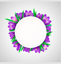 realistic crocus flowers with white round vector image