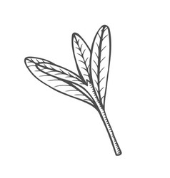 sketch branch of leaves vector image