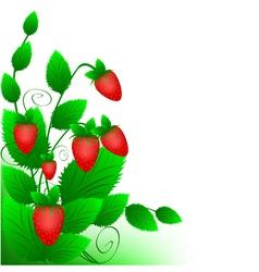 strawberry cartoon vector image