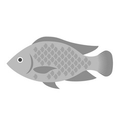 tilapia vector image