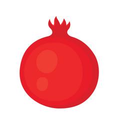 whole pomegranate fruit isolated on white vector image