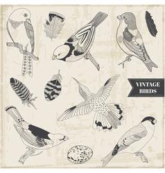 Set Calligraphic Hand drawn Birds vector image