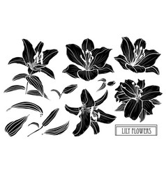 hand drawn floral decorations vector image