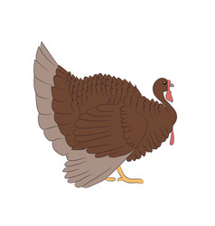 image of a brown turkey white background vector image