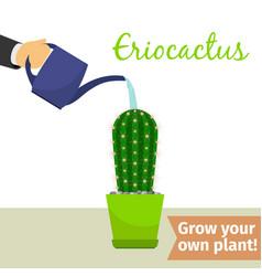 hand watering eriocactus plant vector image
