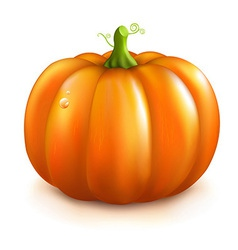 Orange pumpkin vector