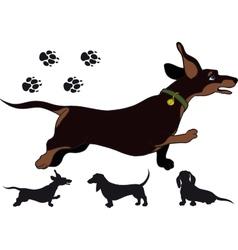 Run dachshund vector image
