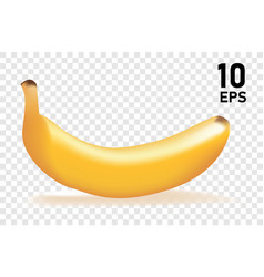 Banana design tropical fruits eps 10 file vector