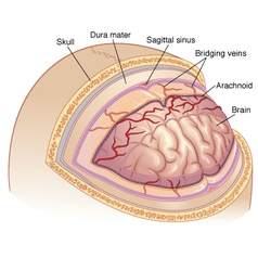 Brain diagram vector image