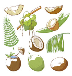 Coconuts hand drawn set vector