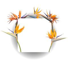 frame with strelitzia reginae vector image