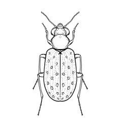 hand drawn bug in vintage style beetles vector image