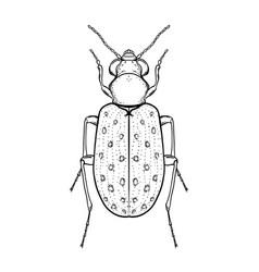 hand drawn bug in vintage style beetles vector image