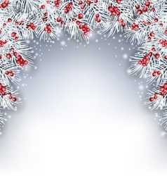 Holiday Background with Silver Fir Twigs and Holly vector image